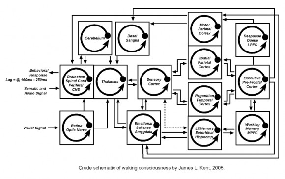 schematic processing model of gender