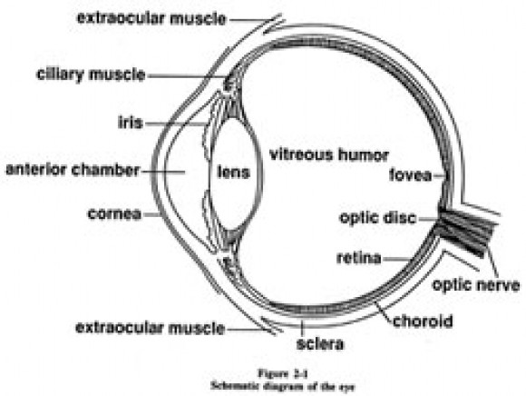 Diagram Of A Eye
